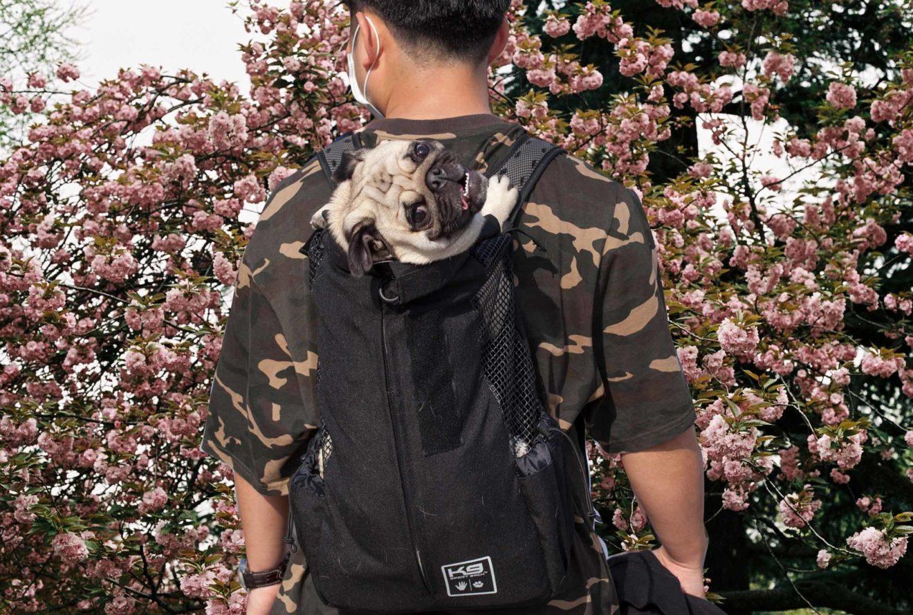 back_analog-20_dogs